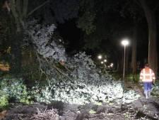 Vooral omgewaaide bomen door storm in regio Maasland