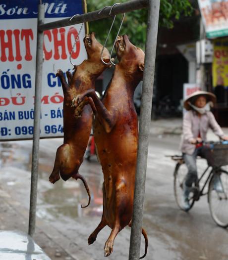 Pendus, assommés, noyés: le commerce de la viande de chien reste juteux au Cambodge