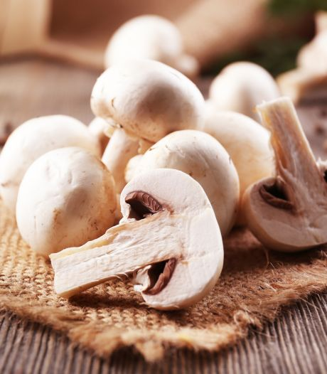 Champignons: zo zie je of ze nog eetbaar zijn