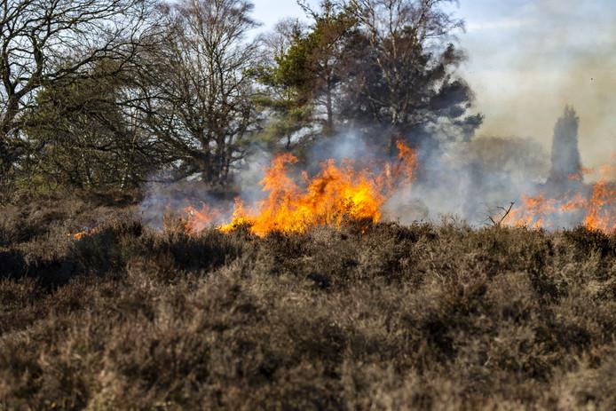 De oude heide wordt verbrand opdat jonge heide groeikansen krijgt. Maandag begon Staatsbosbeheer bij de Rietslenke aan de Nijverdalse kant van de Sallandse Heuvelrug.