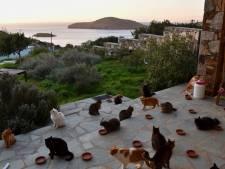 35.000 reacties op droomjob bij Griekse kattenopvang: 'Nooit verwacht'