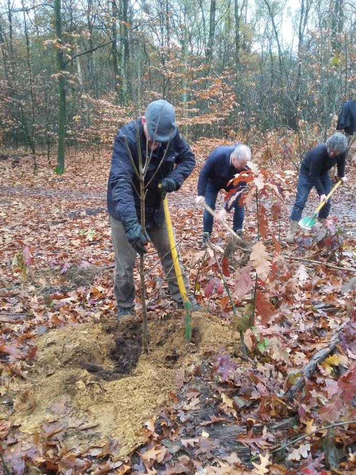 Medewerkers van Vileda planten boompjes in het Bennekomse Bos.