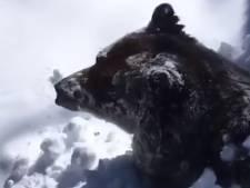 """Un ours sort de son hibernation: """"Le monde continue de tourner"""""""
