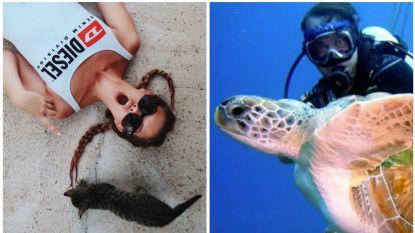 SHOWBITS. Bab Buelens viert kattendag en Marco Borsato zwemt met een schildpad