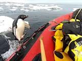 Pinguïn verrast poolonderzoekers