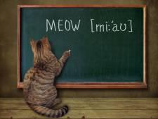 Spreek jij kattentaal? Doe de quiz en test je kennis