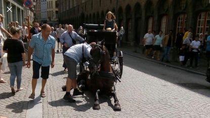 """Opschudding over ineengezakt paard in Brugse binnenstad: """"Niks te maken met de hitte"""""""