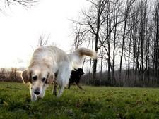 Alternatief plan voor losloopgebied honden in de Renderklippen