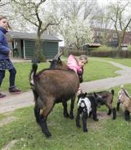 Informatieavond over kinderboerderij in Nijverdal