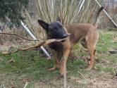 Hiep hiep hoera, politiehond Bouke is 1 jaar
