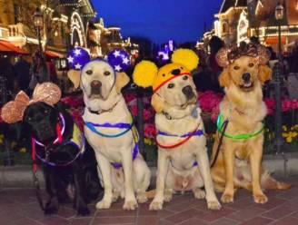 Zo schattig: geleidehonden gaan een dagje naar Disneyland