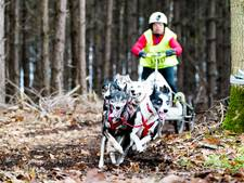 Internationale sledehondenwedstrijd in Gilze