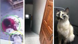 Kat behoedt baby in extremis voor val van trap met ongelofelijke save