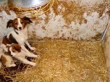Puppyhandelaar in Haarsteeg krijgt zijn honden niet terug