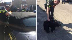 Daar is de zon, daar is hetzelfde probleem weer: Nederlandse politie redt hond uit snikhete auto
