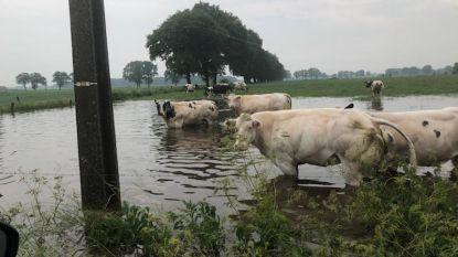 """Hevig onweer trekt over noorden van Antwerpen: """"Zwaarste wolkbreuk in 60 jaar"""""""