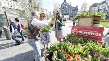 Opnieuw gratis tulpenpluk op Astridplein