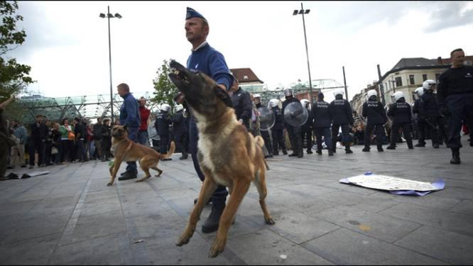 Mechelse herder is beste politiehond
