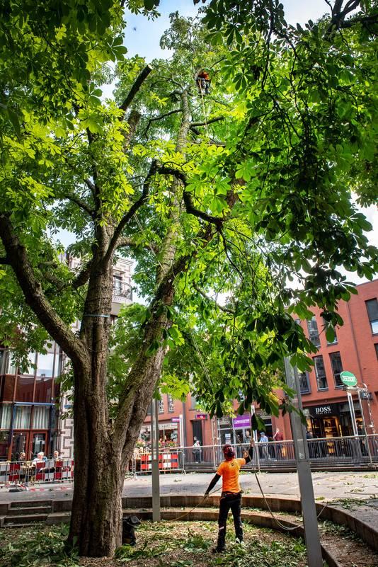 De gehavende kastanjeboom bij monument De Schommel aan de Marikenstraat.