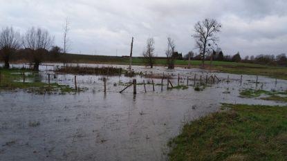 Provincie Limburg legt overstromingszone aan op Winterbeek