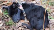 Jonge hond wordt op amper 50 meter van asiel gedumpt en vriest dood