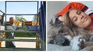 SHOWBITS. Naar 't containerpark met Maxime De Winne en het hondenleven van Kat Kerkhofs