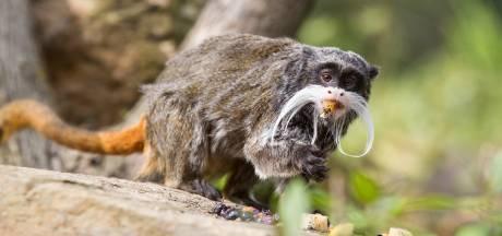 Vergevorderde plannen voor dierenpark met exotische apen in Lochem