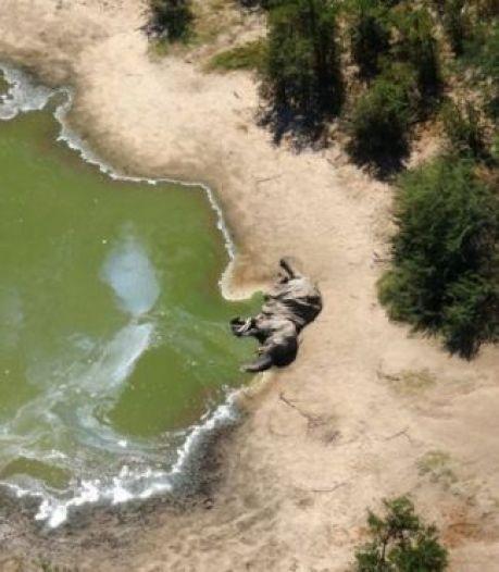 Massale sterfte van olifanten in Botswana, niemand weet hoe het komt