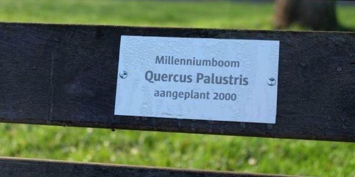 De bomen krijgen na 20 jaar nieuwe zitbanken met een decoratief gedenkplaatje.
