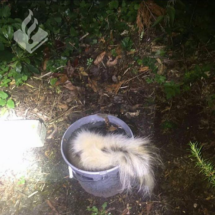 De Eindhovenaar die een stinkdier met hout en schop sloeg en vervolgens in een emmer verdronk, verdient een werkstraf wegens dierenmishandeling vindt het OM