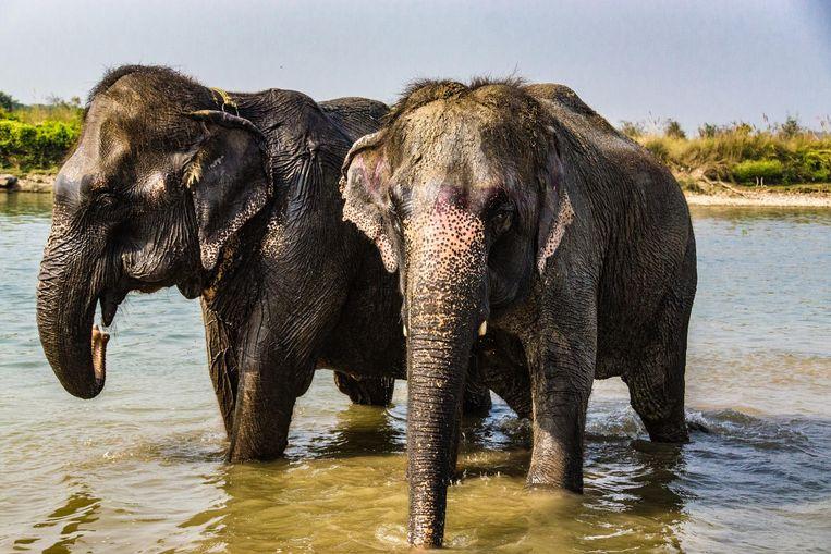 Olifanten spotten in het Chitwan Nationaal Park.