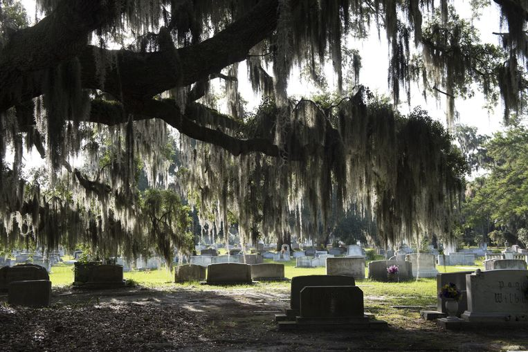 Bonaventure Cemetery, een van de mooiste begraafplaatsen ter wereld, waar het slachtoffer Danny Hansford ook ligt (foto linksonder). LinksForsyth Park, rechtsonder Club One, de gay-nachtclub van de stad. Savannah is altijd de homoplek van het Zuiden geweest. Beeld Els Zweerink