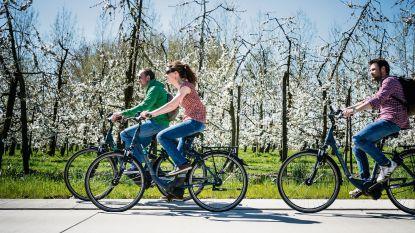Genieten van de bloesems in Vlaams-Brabant