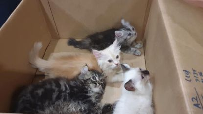 """Grenscontrole onderzoekt verdachte """"bult"""" in broek van bestuurder en vindt vier levende (!) kittens"""
