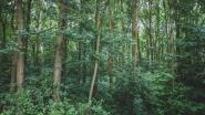 Speelbos krijgt 50.000 euro subsidie