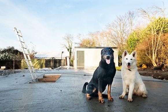 De honden Manook en Sjaka. Manook wekt het koppel op tijd zodat zij konden ontkomen.