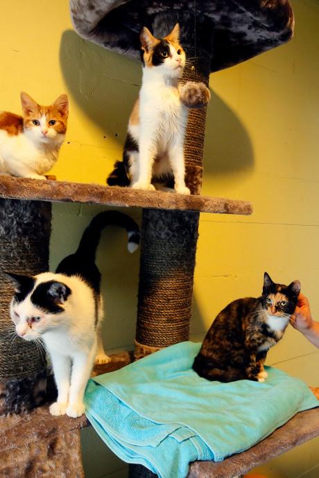 Baasjes gezocht voor 44 katten die samen in één huis leefden
