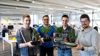 VIDEO: Programmeurs verzorgen bonsais op kantoor
