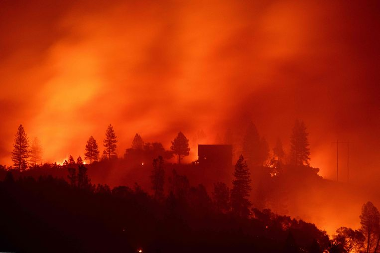 Bosbrand in Californië. Beeld AFP