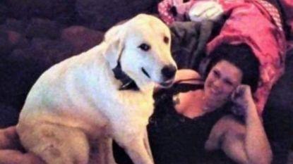 Hond redt gezin van dolle schutter maar schiet er zelf leven bij in