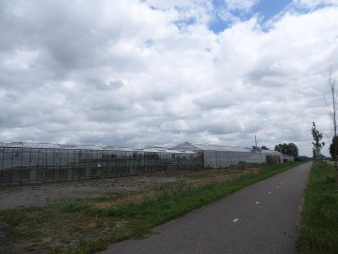 Het kassencomplex aan de Ruigenhoekweg in Woudrichem.