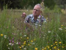 Insecten blijven smullen omdat niemand plukt in Raalter pluktuin