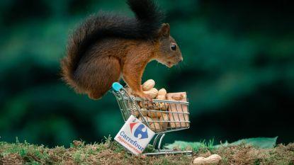 """Diepenbekenaar trekt ludieke foto's van eekhoorns in eigen achtertuin: """"Ik werk vaak een hele dag aan het decor"""""""
