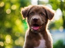 Dode pup in vuilniszak gevonden in bos Lelystad