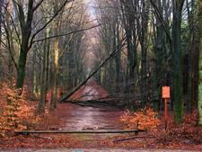 Ravage in Apeldoornse en Veluwse bossen: oppassen