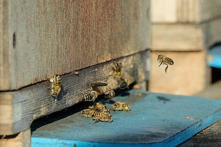 Bijen komen nu al uit hun winterrust.