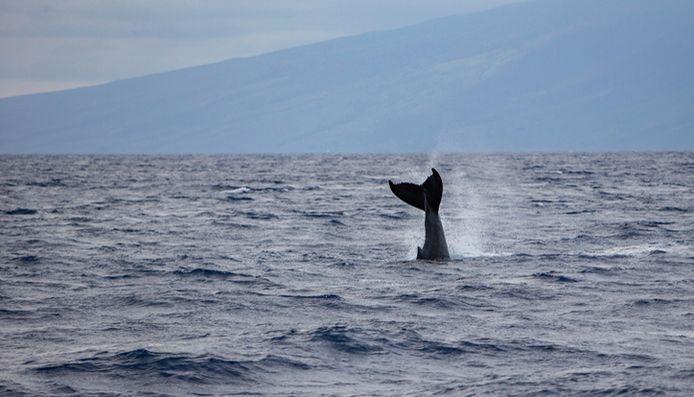 Une baleine dans l'océan pacifique.