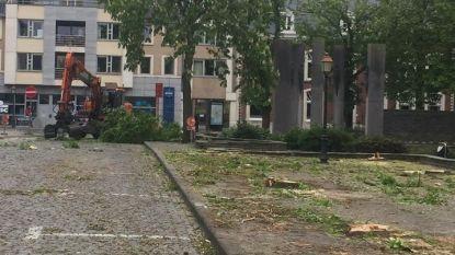 Kastanjebomen gaan tegen de grond op het Heldensquare