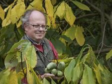 Pawpawfestival in Nijverdal moet Amerikaanse vrucht populair maken