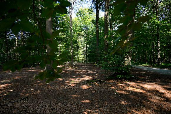 Momenteel werden er 867 bomen geïnventariseerd op het openbaar domein, dit aantal willen we in de nabije toekomst fors om hoog krikken.